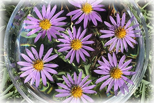 home_slider_asters